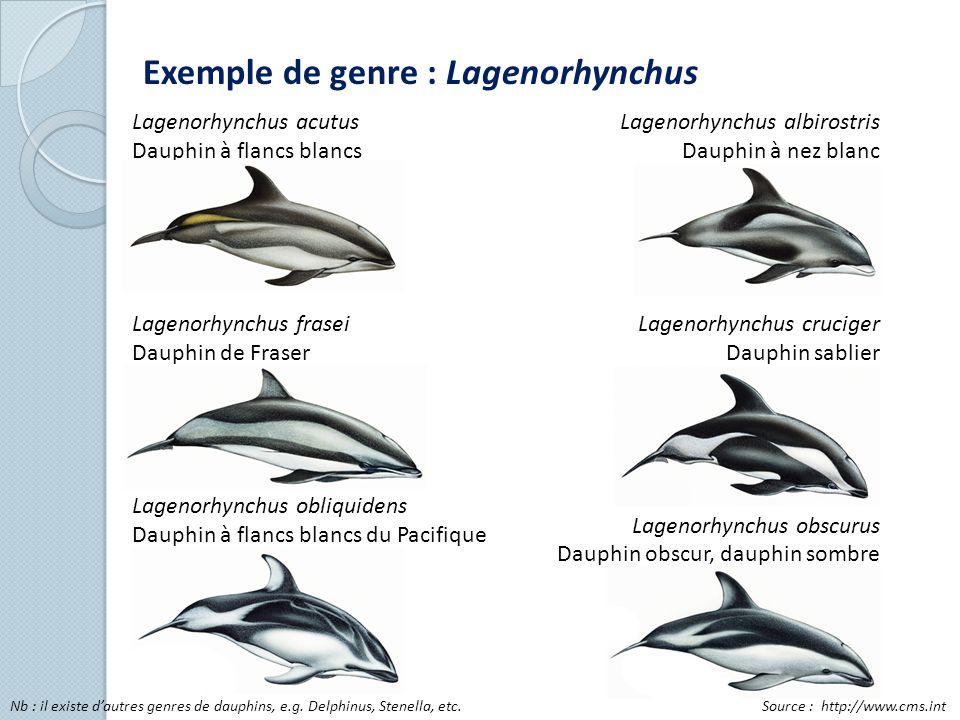 Exemple de genre : Lagenorhynchus