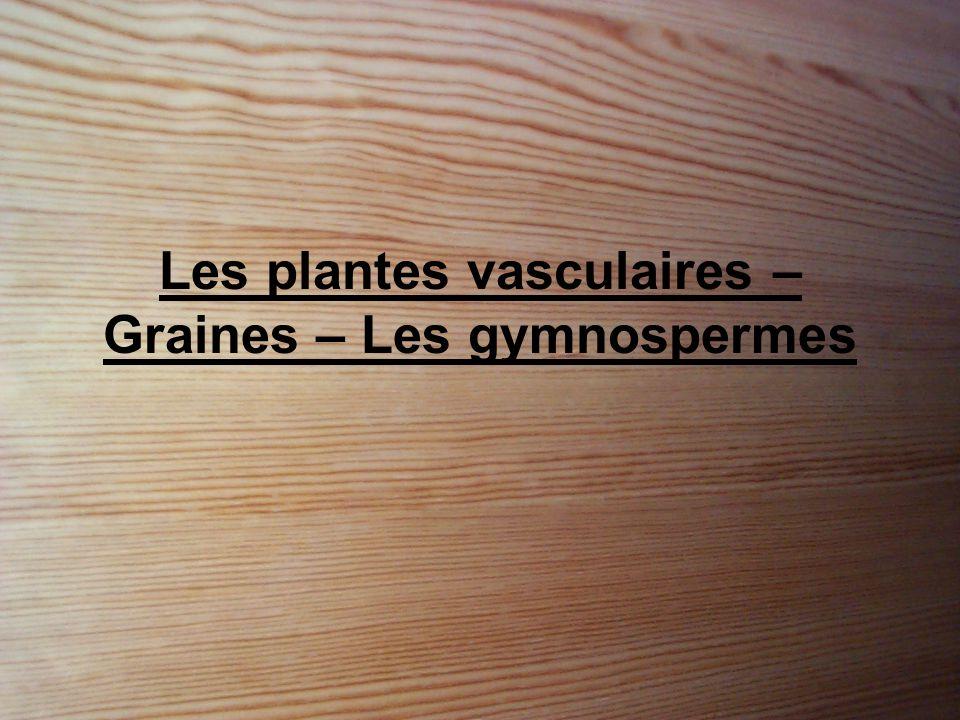 Les plantes vasculaires – Graines – Les gymnospermes