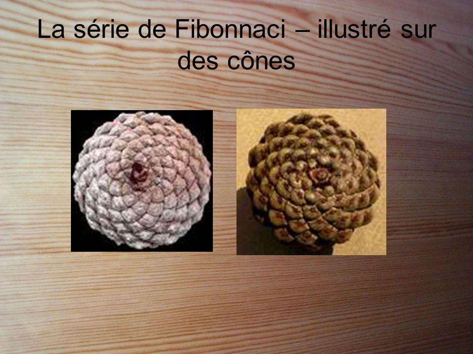 La série de Fibonnaci – illustré sur des cônes