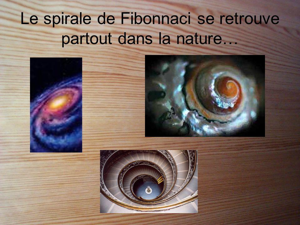 Le spirale de Fibonnaci se retrouve partout dans la nature…