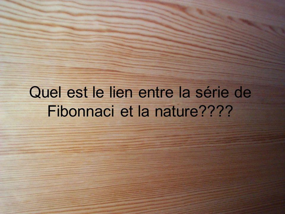 Quel est le lien entre la série de Fibonnaci et la nature