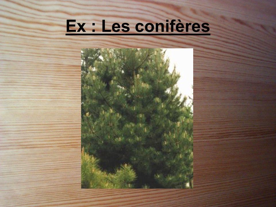 Ex : Les conifères