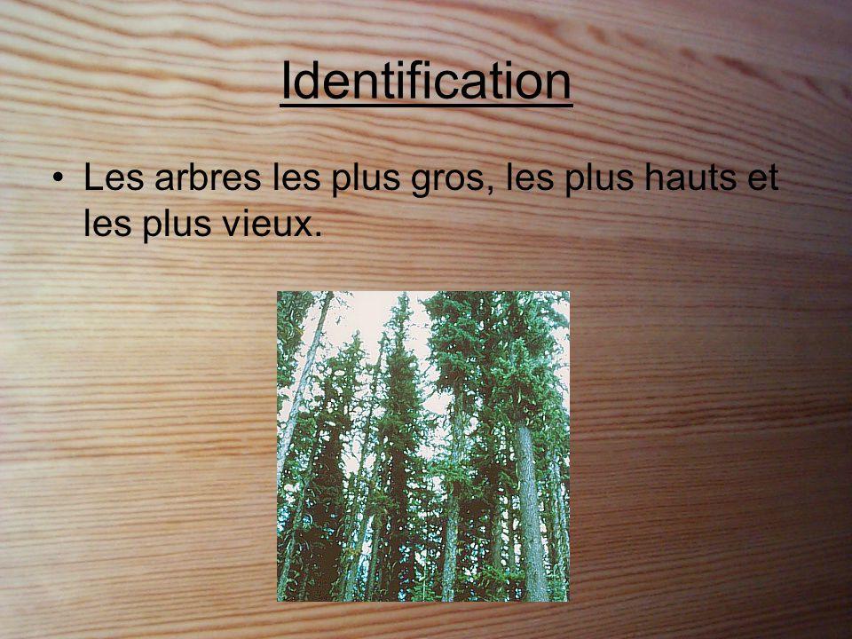 Identification Les arbres les plus gros, les plus hauts et les plus vieux.