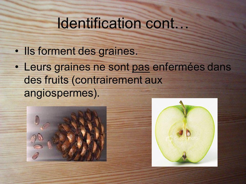 Identification cont… Ils forment des graines.