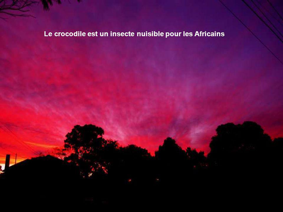 Le crocodile est un insecte nuisible pour les Africains