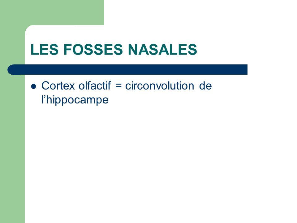 LES FOSSES NASALES Cortex olfactif = circonvolution de l'hippocampe