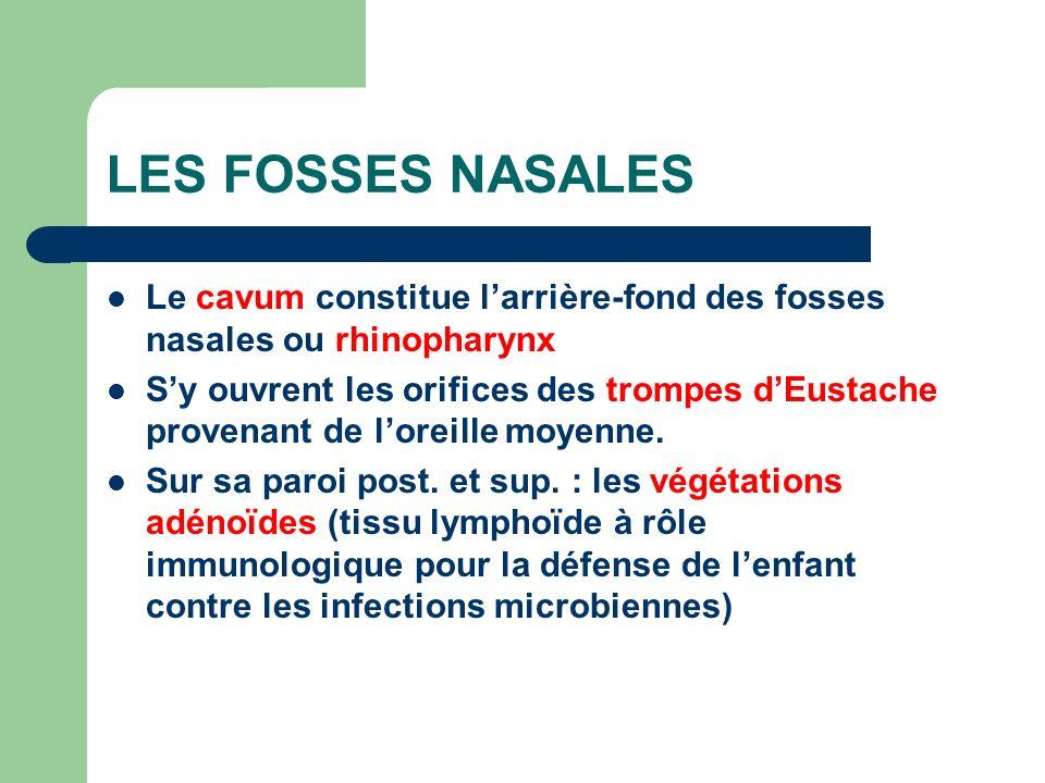 LES FOSSES NASALES Le cavum constitue l'arrière-fond des fosses nasales ou rhinopharynx.