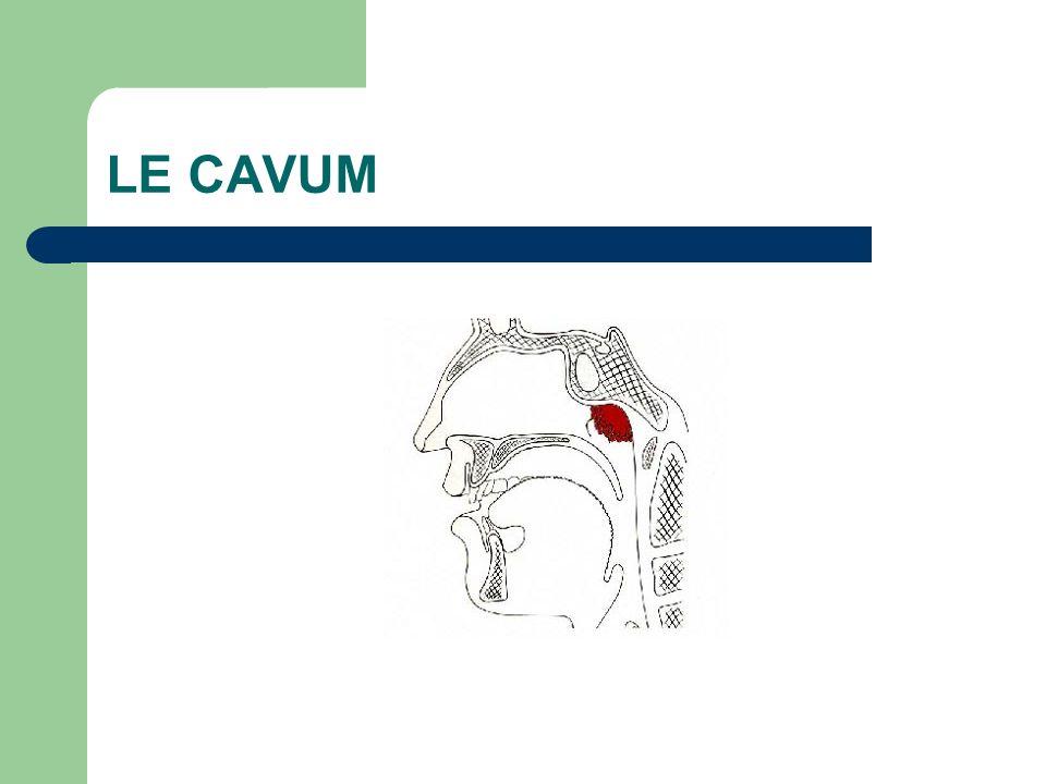 LE CAVUM