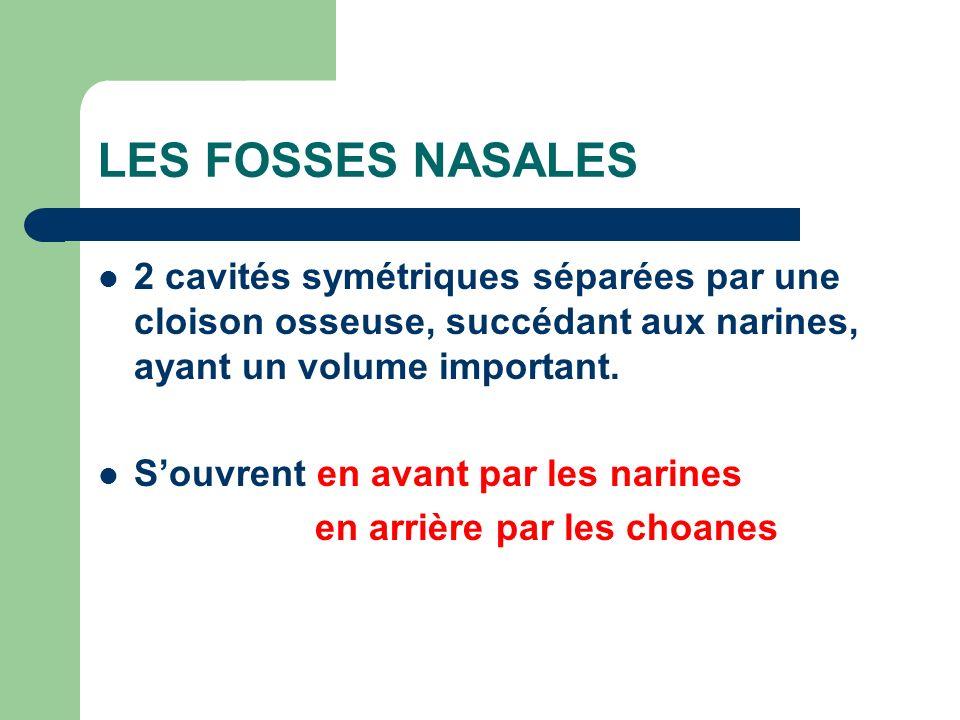 LES FOSSES NASALES 2 cavités symétriques séparées par une cloison osseuse, succédant aux narines, ayant un volume important.