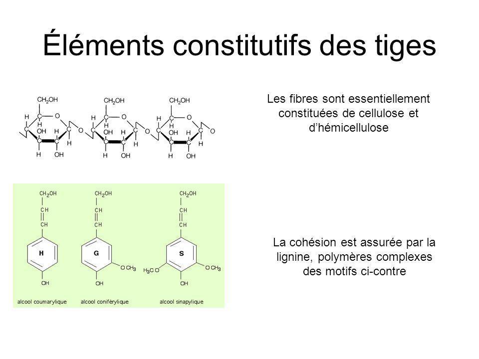 Éléments constitutifs des tiges