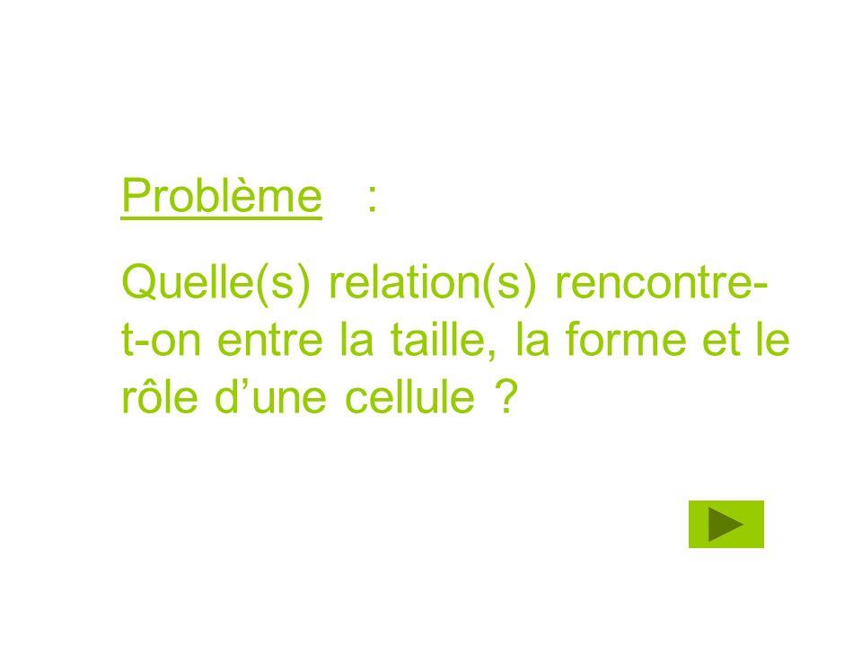 Problème : Quelle(s) relation(s) rencontre-t-on entre la taille, la forme et le rôle d'une cellule