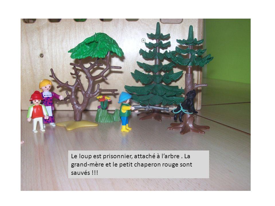Le loup est prisonnier, attaché à l'arbre