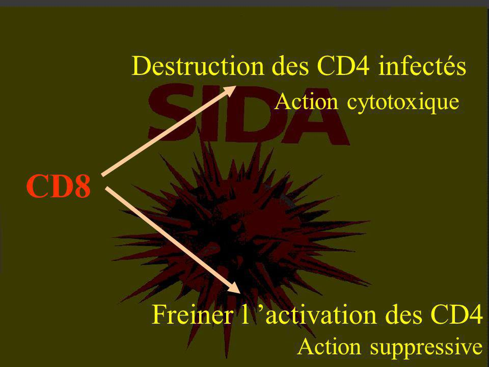 CD8 Destruction des CD4 infectés Action cytotoxique