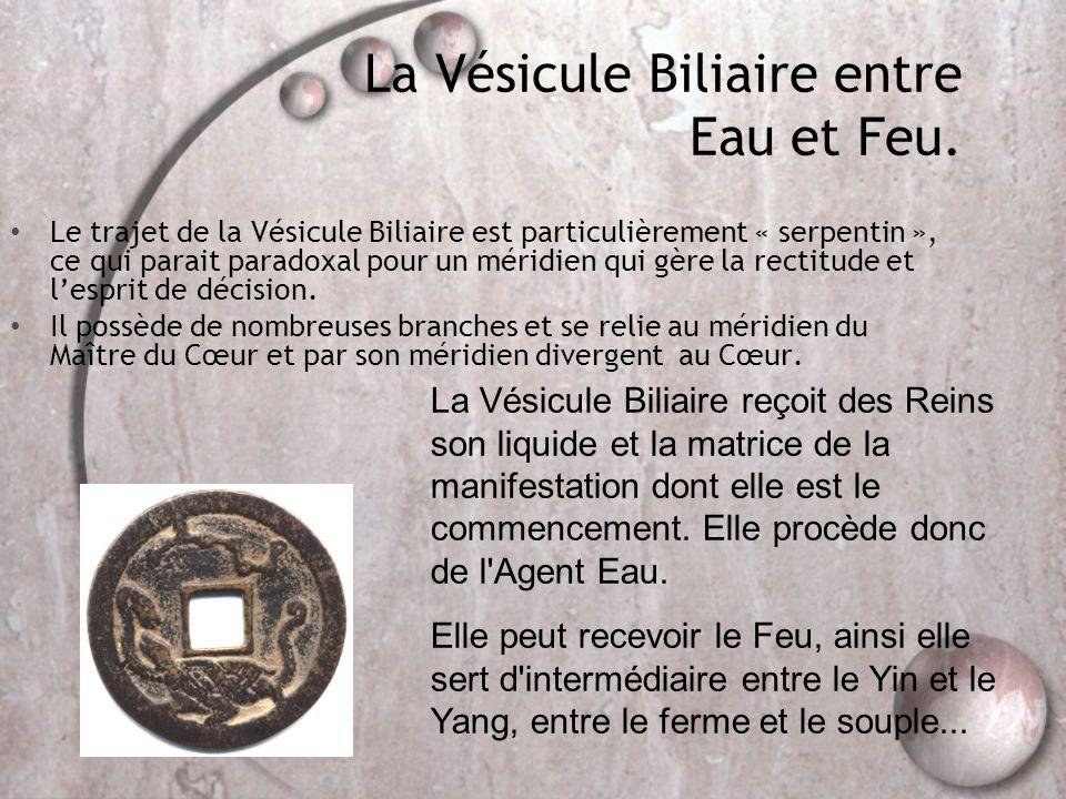 La Vésicule Biliaire entre Eau et Feu.