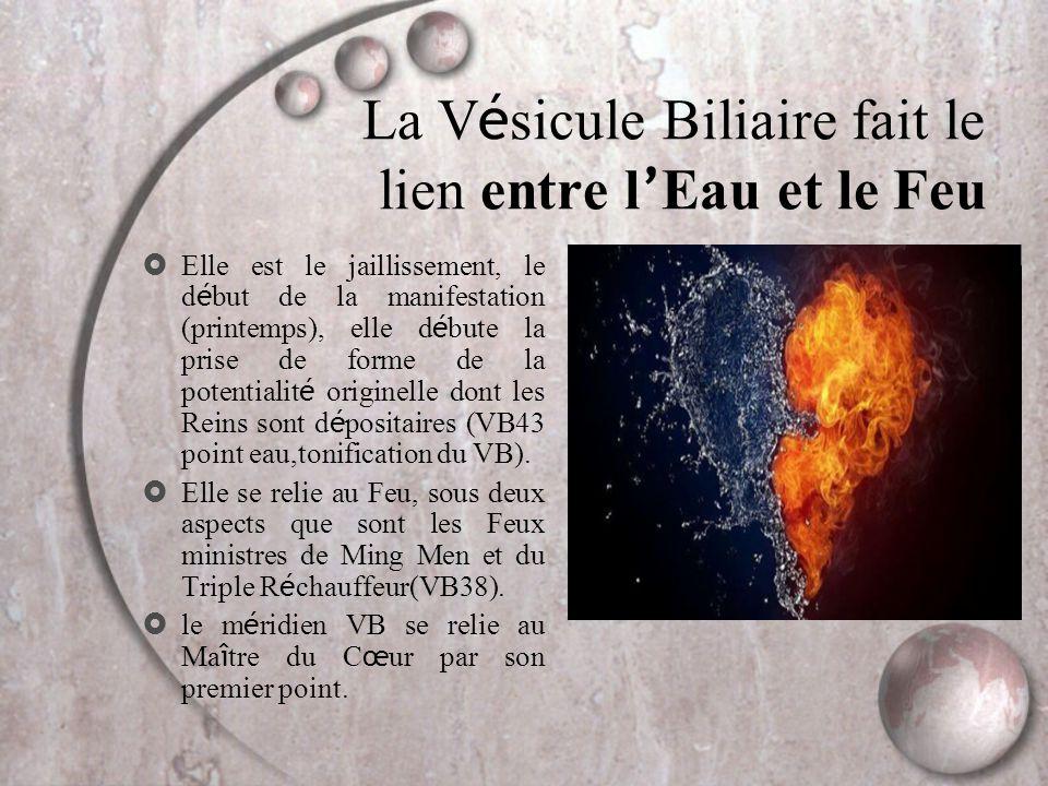 La Vésicule Biliaire fait le lien entre l'Eau et le Feu