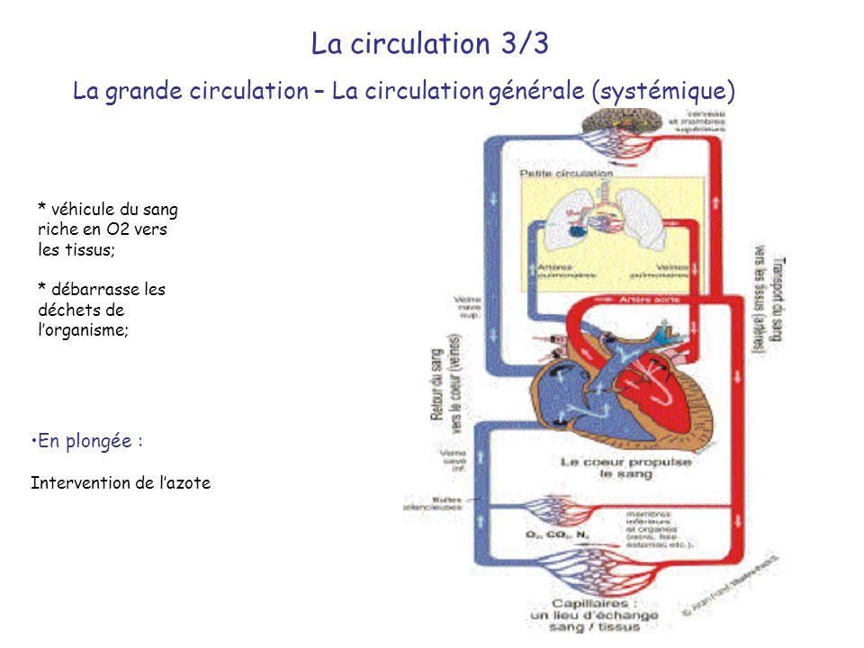La grande circulation – La circulation générale (systémique)