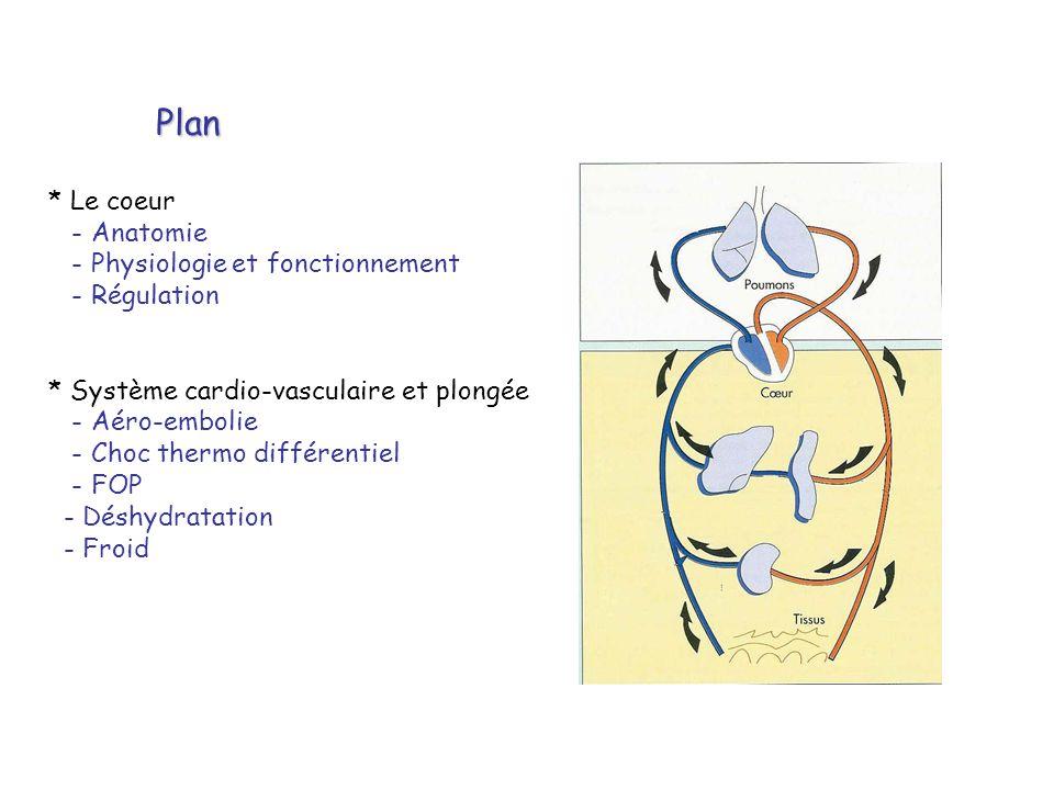 Plan * Le coeur - Anatomie - Physiologie et fonctionnement