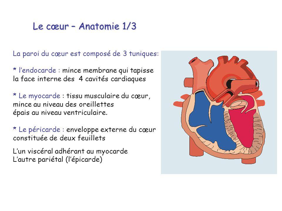 Le cœur – Anatomie 1/3 La paroi du cœur est composé de 3 tuniques: