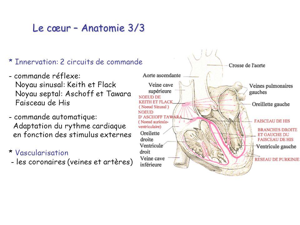Le cœur – Anatomie 3/3 * Innervation: 2 circuits de commande