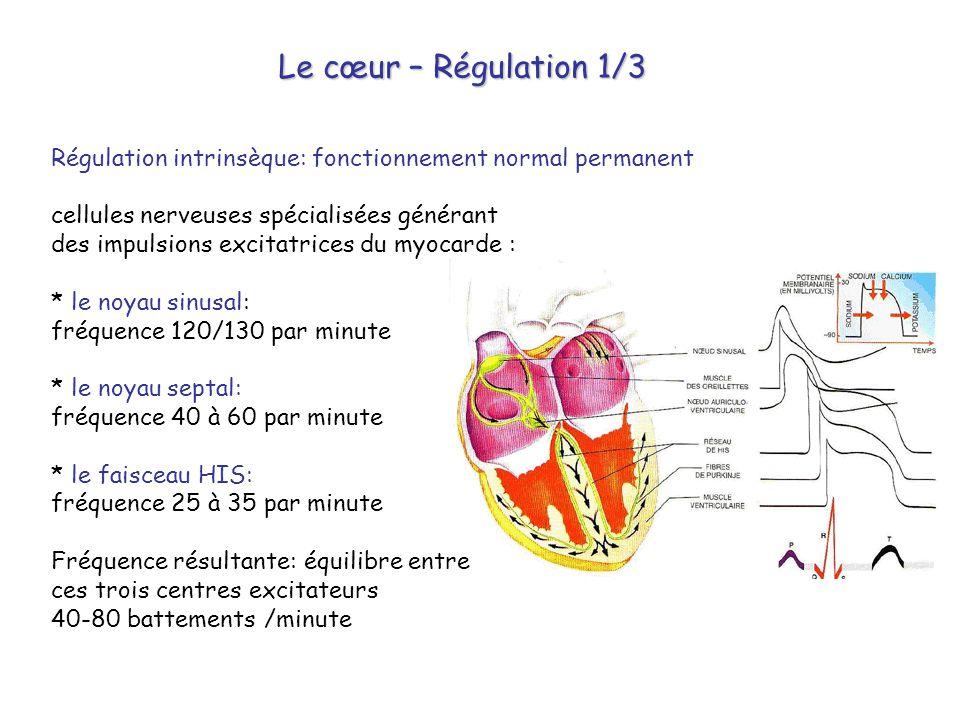 Le cœur – Régulation 1/3 Régulation intrinsèque: fonctionnement normal permanent. cellules nerveuses spécialisées générant.