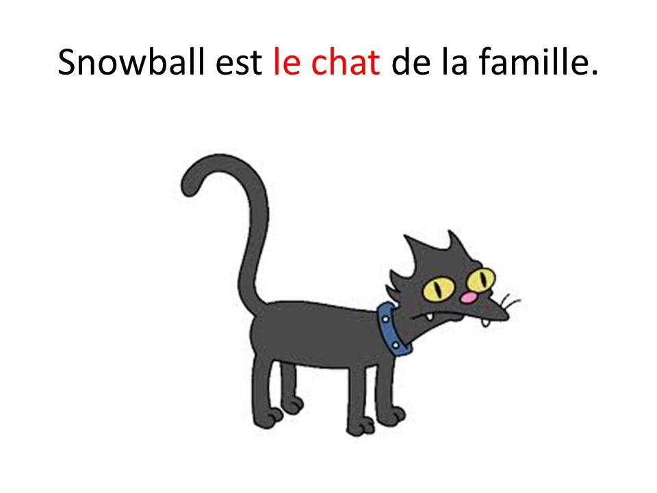 Snowball est le chat de la famille.
