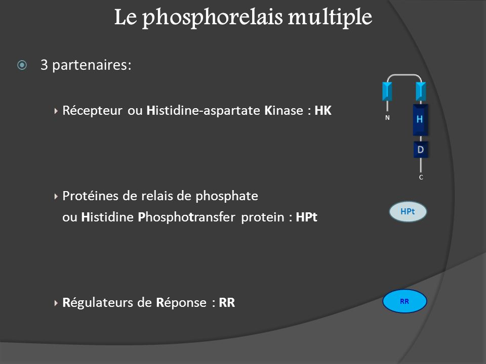 Le phosphorelais multiple