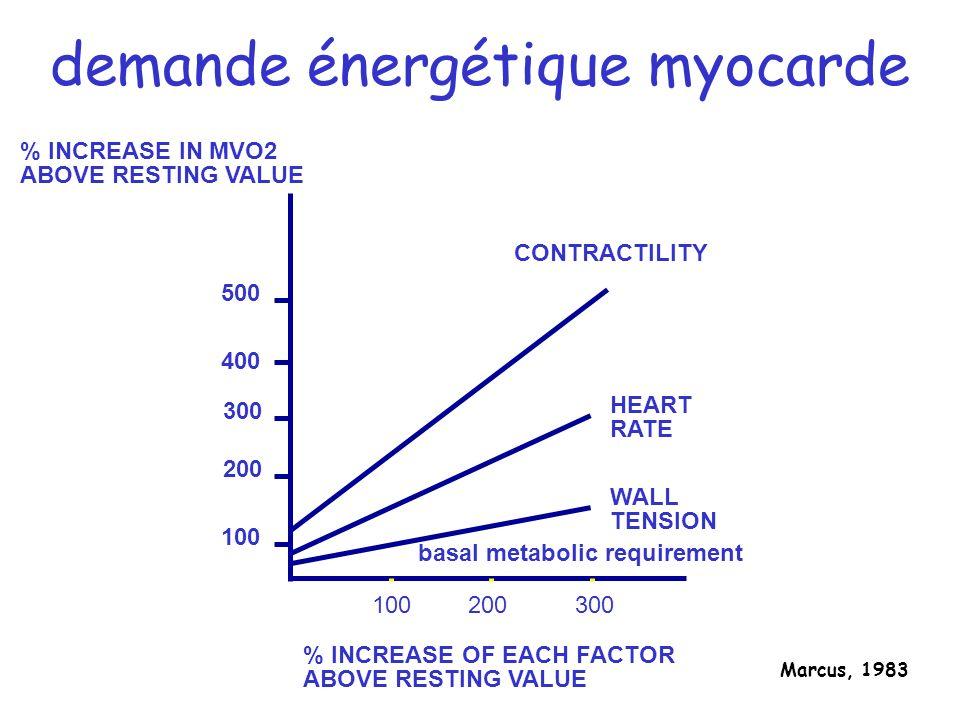 demande énergétique myocarde