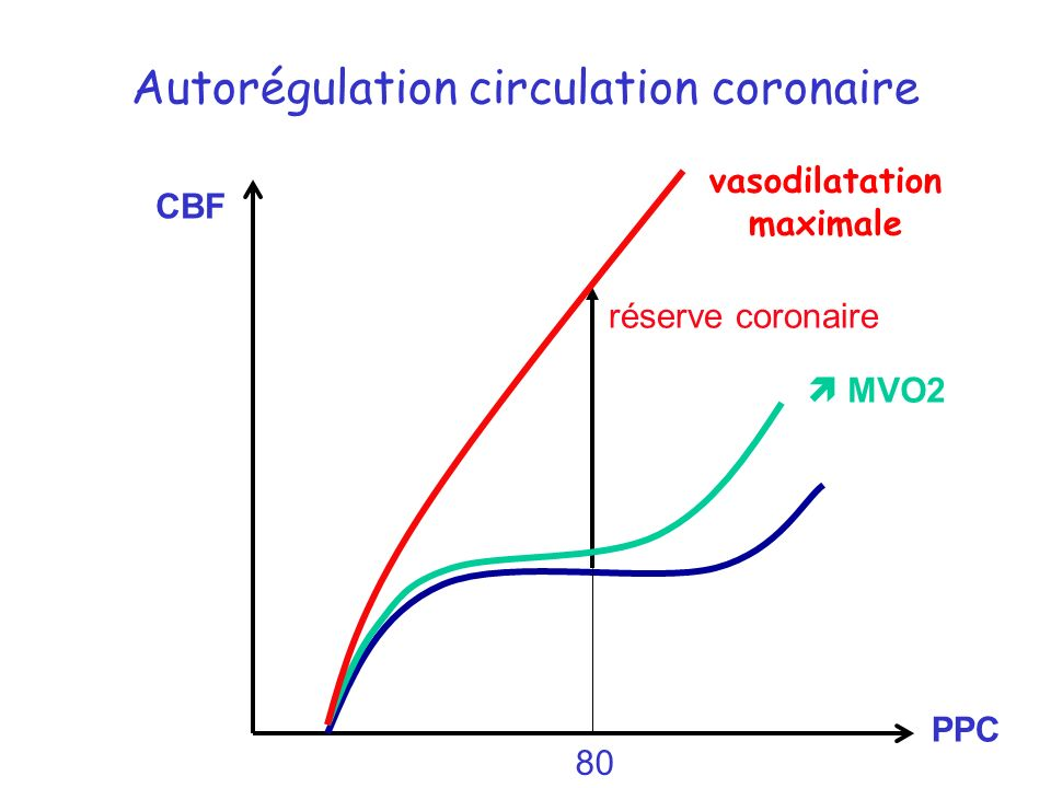 Autorégulation circulation coronaire