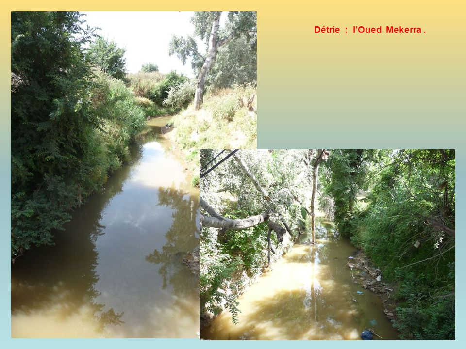 Détrie : l'Oued Mekerra .