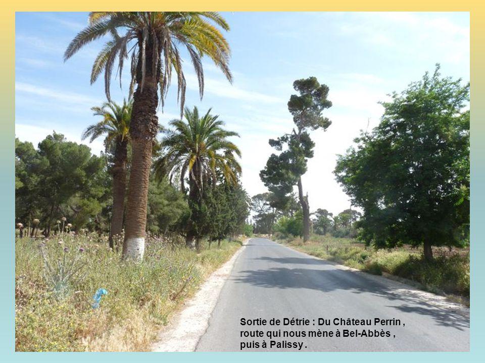 Sortie de Détrie : Du Château Perrin , route qui nous mène à Bel-Abbès , puis à Palissy .