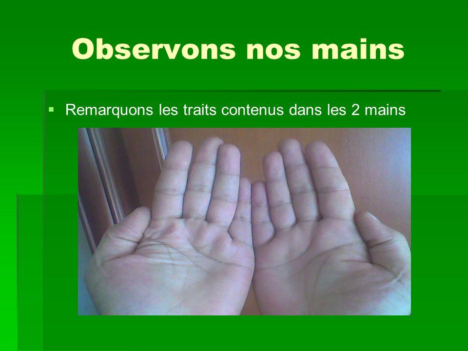 Observons nos mains Remarquons les traits contenus dans les 2 mains