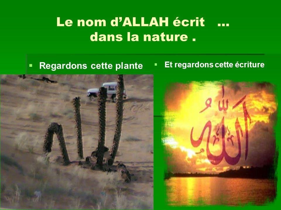 Le nom d'ALLAH écrit … dans la nature .