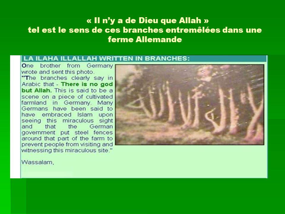 « Il n'y a de Dieu que Allah » tel est le sens de ces branches entremêlées dans une ferme Allemande