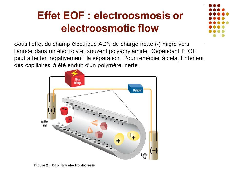 Effet EOF : electroosmosis or electroosmotic flow