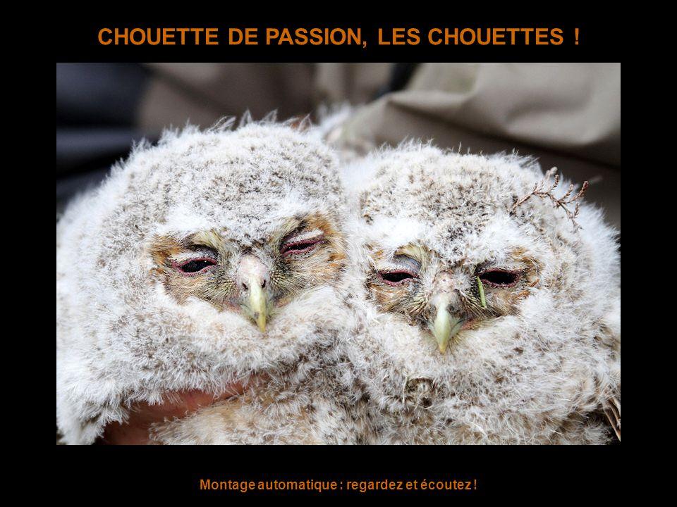 CHOUETTE DE PASSION, LES CHOUETTES !