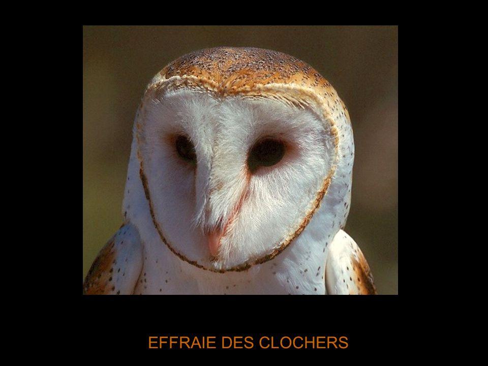 EFFRAIE DES CLOCHERS