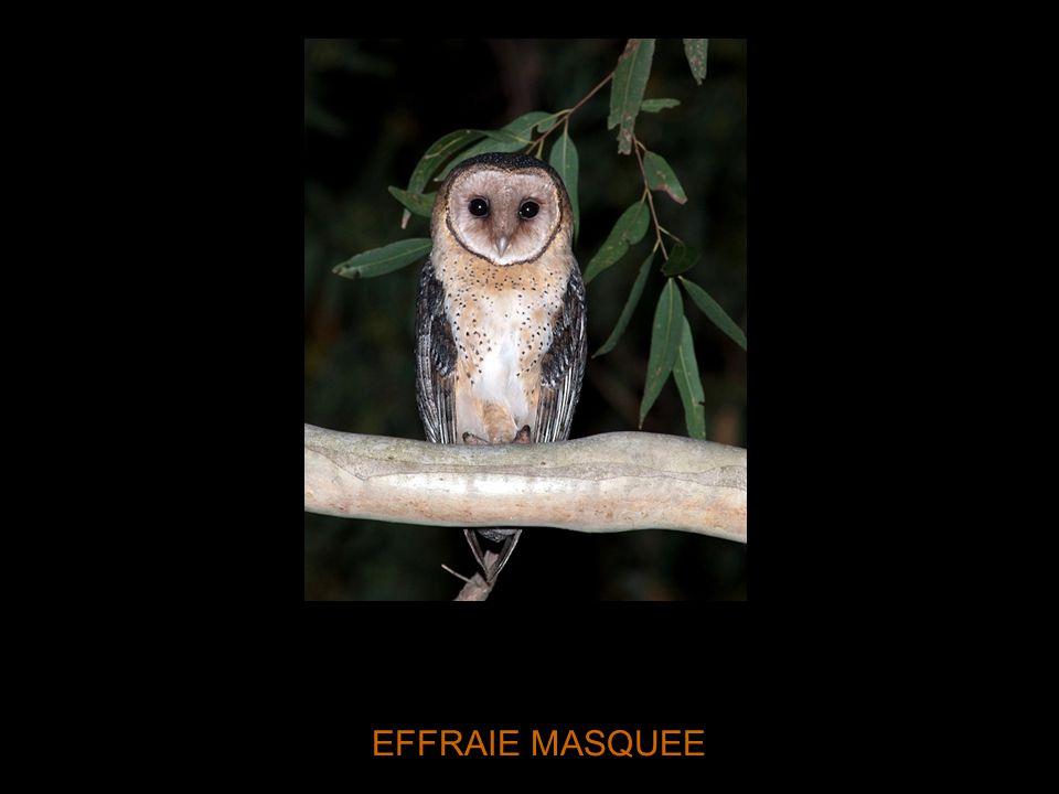 EFFRAIE MASQUEE