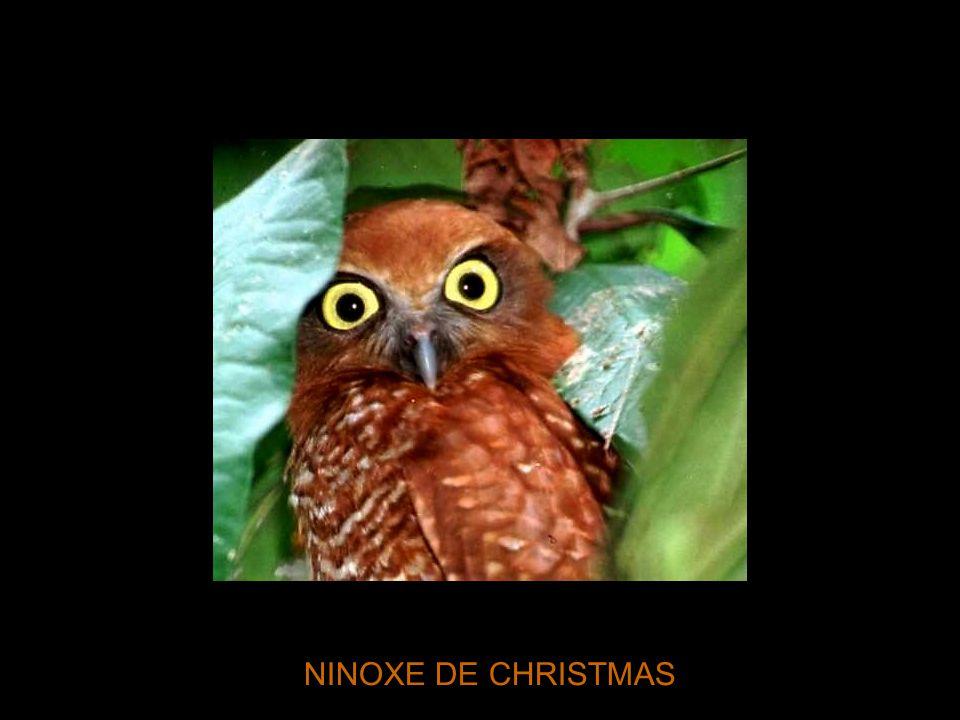 NINOXE DE CHRISTMAS