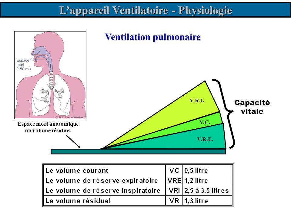 L'appareil Ventilatoire - Physiologie Espace mort anatomique
