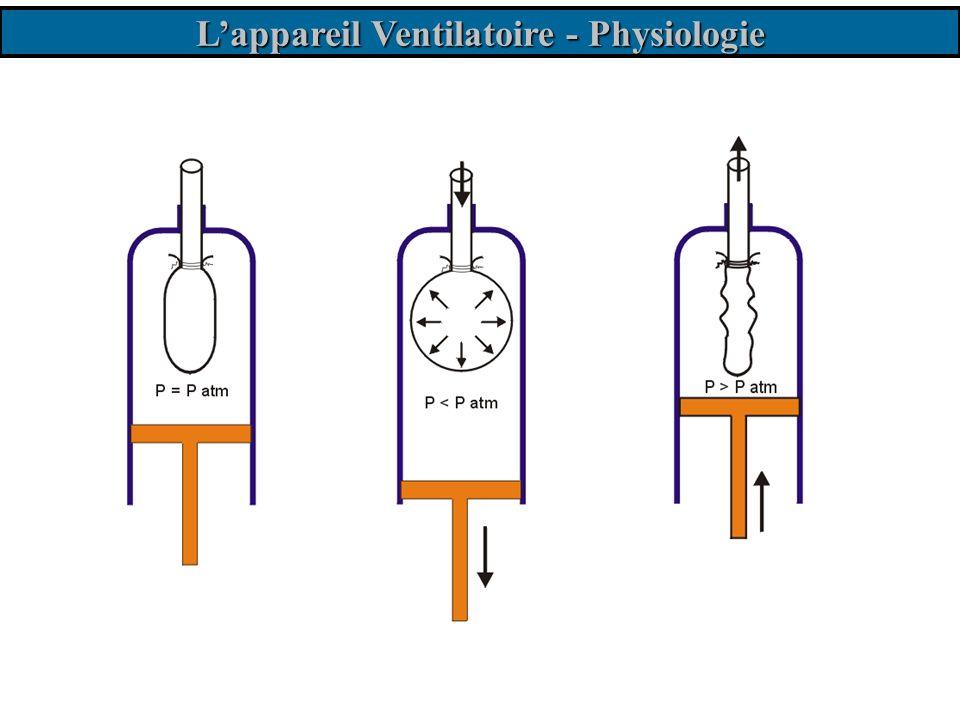 L'appareil Ventilatoire - Physiologie