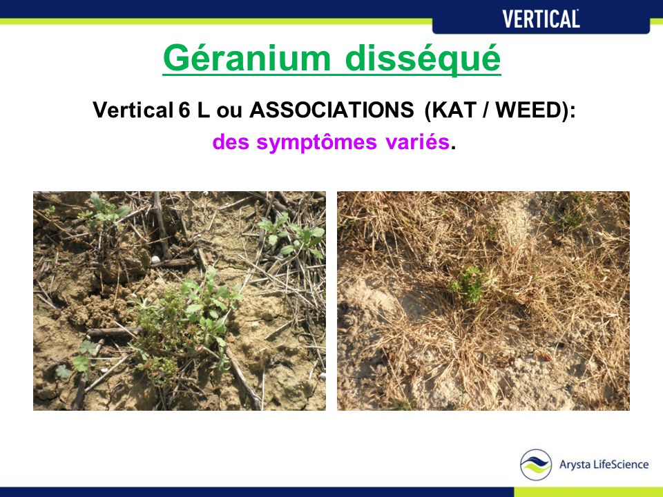 Vertical 6 L ou ASSOCIATIONS (KAT / WEED):