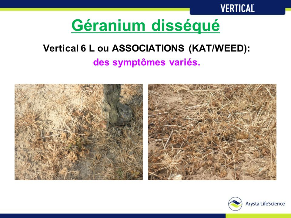 Vertical 6 L ou ASSOCIATIONS (KAT/WEED):