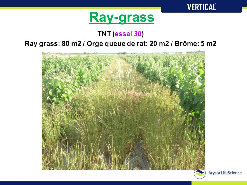 Ray grass: 80 m2 / Orge queue de rat: 20 m2 / Brôme: 5 m2