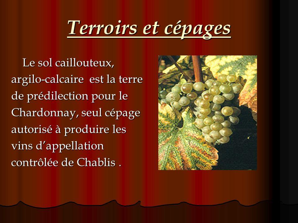 Terroirs et cépages argilo-calcaire est la terre