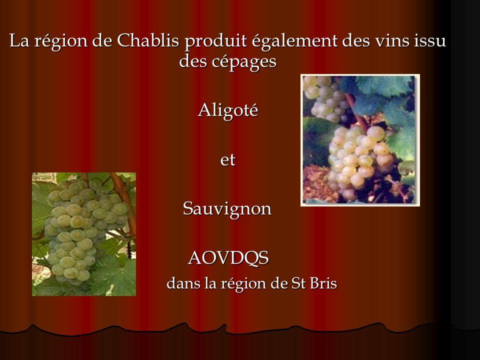 La région de Chablis produit également des vins issu des cépages