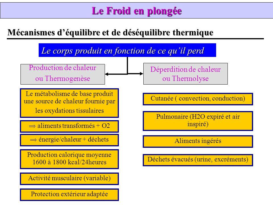 Le Froid en plongée Mécanismes d'équilibre et de déséquilibre thermique. Le corps produit en fonction de ce qu'il perd.