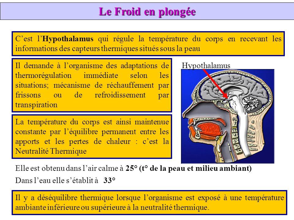 Le Froid en plongée C'est l'Hypothalamus qui régule la température du corps en recevant les informations des capteurs thermiques situés sous la peau.
