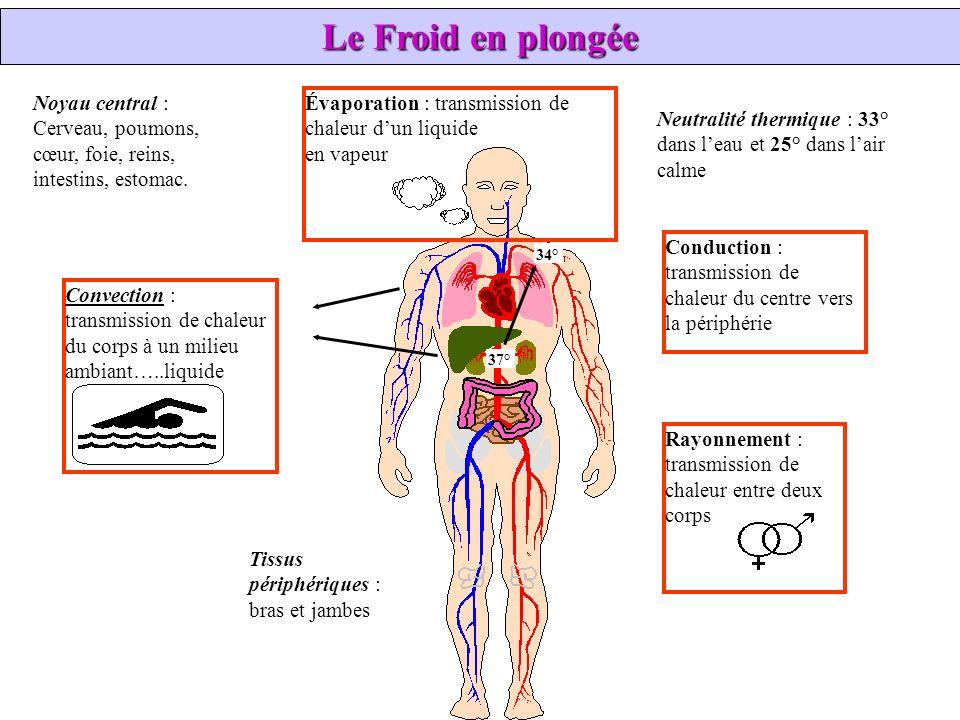 Le Froid en plongée Noyau central : Cerveau, poumons, cœur, foie, reins, intestins, estomac. Évaporation : transmission de.
