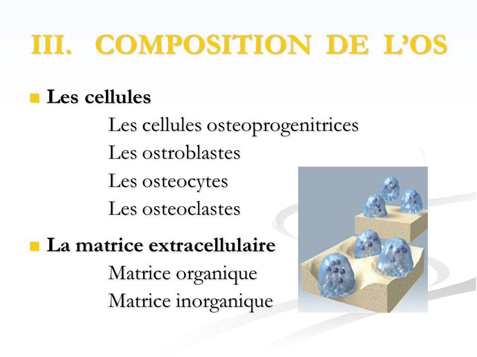 III. COMPOSITION DE L'OS