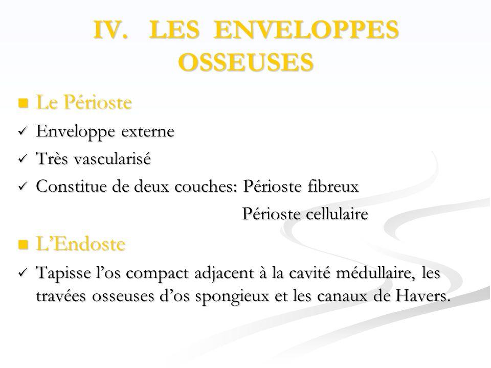 IV. LES ENVELOPPES OSSEUSES